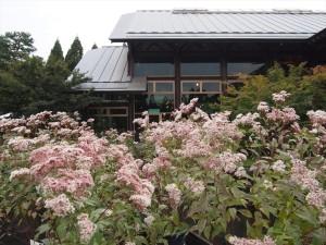 藤袴と和の花展