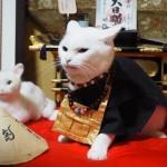 猫猫寺 猫住職 10月