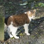 宗像神社の猫