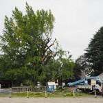 西本願寺 台風被害 10月