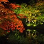 高台寺の夜間拝観
