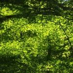 清水寺 11月1日 緑も美しい