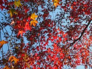 清水寺 11月1日 色づいた木も僅かにある