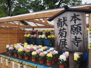 本願寺 献菊展