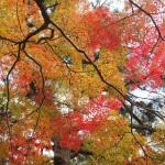 京都御苑 11月5日