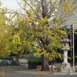 頂妙寺 11月6日