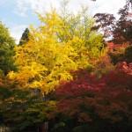 今熊野観音寺 11月6日