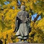 頂妙寺のイチョウ 11月7日