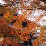 南禅寺 11月10日