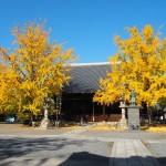 頂妙寺 11月11日