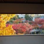 永観堂 11月10日