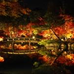 永観堂 ライトアップ 11月