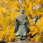 頂妙寺のイチョウ