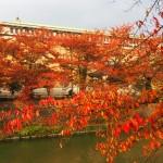 琵琶湖疏水 11月12日