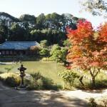 浄瑠璃寺 11月13日