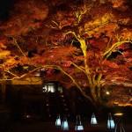 神蔵寺 ライトアップ 11月