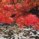 大原野神社 11月16日