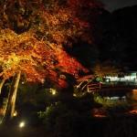 大原野神社 ライトアップ 11月16日