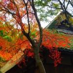春秋山荘 11月16日
