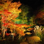 天授庵のライトアップ 11月16日