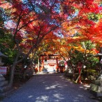 大原野神社 11月