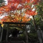 今宮神社 11月17日