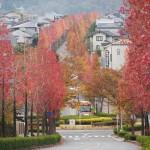 桂坂 11月18日