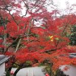 神蔵寺 11月18日