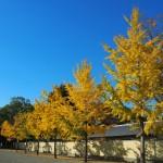 京都御苑 11月18日