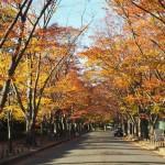 京都府立植物園 11月18日