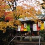 今熊野観音寺 11月18日