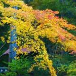 東福寺 即宗院 11月19日