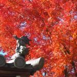 東福寺 同聚院 11月19日