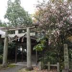 京都観光神社の山茶花