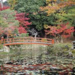 大原野神社 11月19日