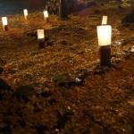 岩戸落葉神社 ライトアップ