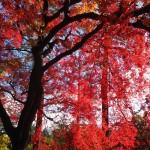 京都御苑 11月
