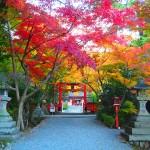 大原野神社 11月20日