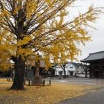 頂妙寺 11月20日
