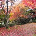 勝持寺の紅葉 11月20日