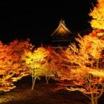 妙覚寺 ライトアップ 11月