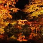 醍醐寺 ライトアップ 11月