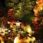 毘沙門堂 ライトアップ 11月21日