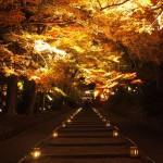 毘沙門堂 ライトアップ 11月
