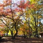 京都御苑 11月21日