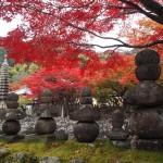 化野念仏寺 11月22日