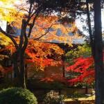 広隆寺 11月