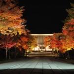 仁和寺 ライトアップ 11月