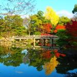 京都御苑 九条池 11月