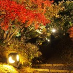梅小路公園 朱雀の庭 11月22日